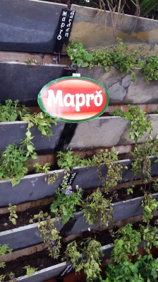 Mapro10