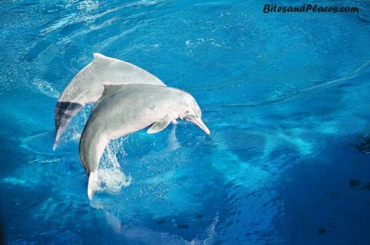 DolphinLagoon