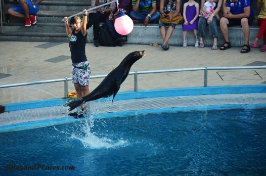DolphinLagoon2