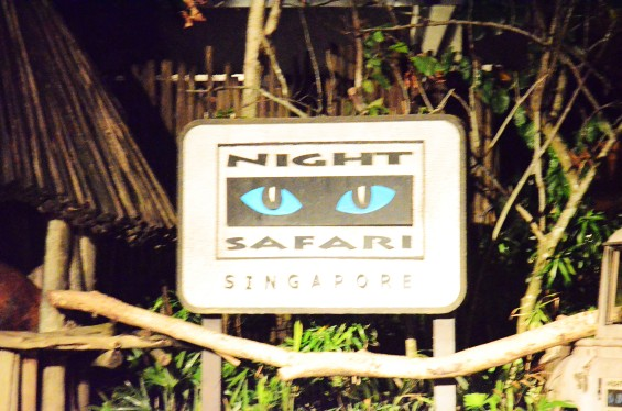 NightSafari3