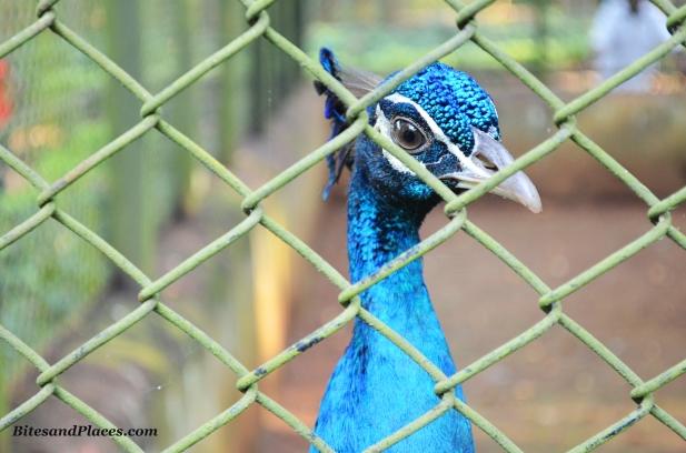 Bondla Zoo