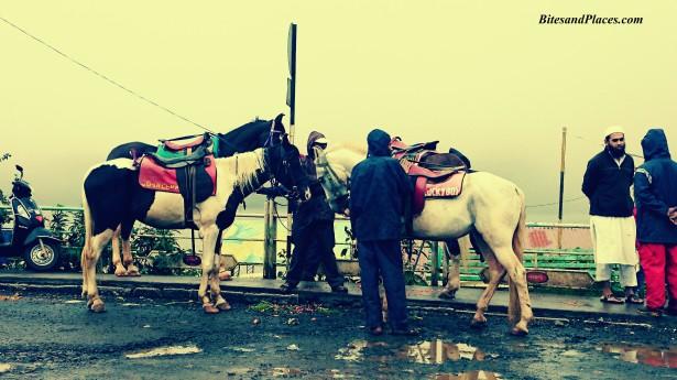 Venna Horses